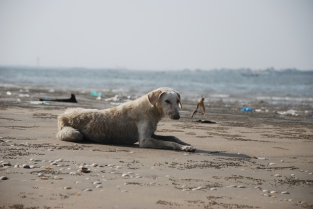 Dog Island